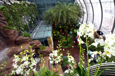 IMB_SingaporeChangi_bgarden1