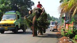 IMB_RickshawChallenge2