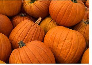 IMB_pumpkins
